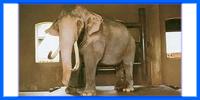 ช้างประจำรัชกาลที่ 9