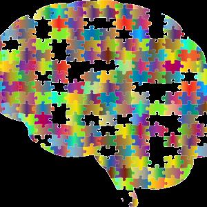 ภาพ สมอง ที่มา : https://pixabay.com/vectors/brain-cranium-head-psychology-2750453/