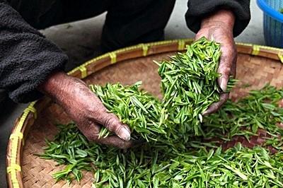 ภาพภาพ Tea leaves ที่มา:https://cdn.pixabay.com/photo/ 2015/02/04/13/23/tea-623796_960_720.jpg
